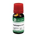 STAPHISAGRIA LM 6 Dilution